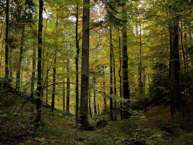 Прашуму Јањ УНЕСКО прогласио природним добром од свјетског значаја